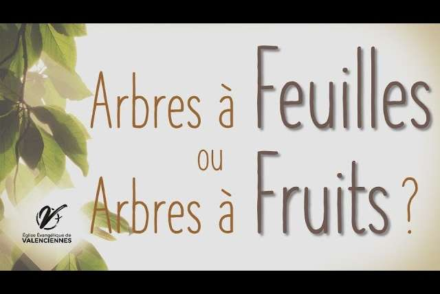 Arbres à fruits ou arbres à feuilles
